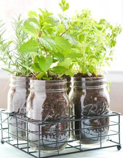 Fines-herbes-dans-pots-Mason